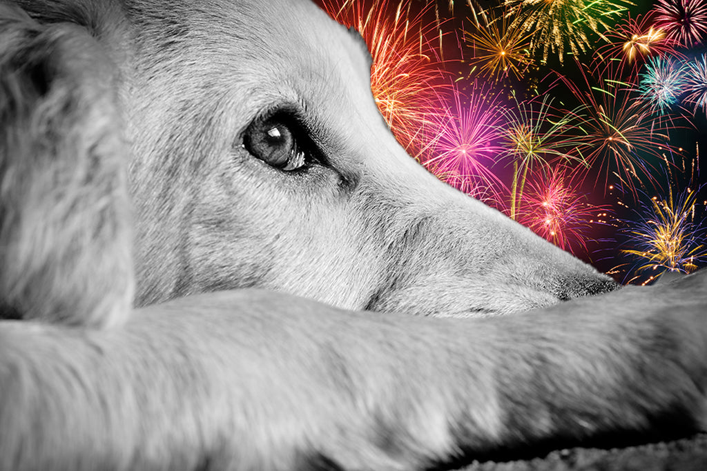Help Alleviate Your Pet's Anxiety This Fourth of July With CBD