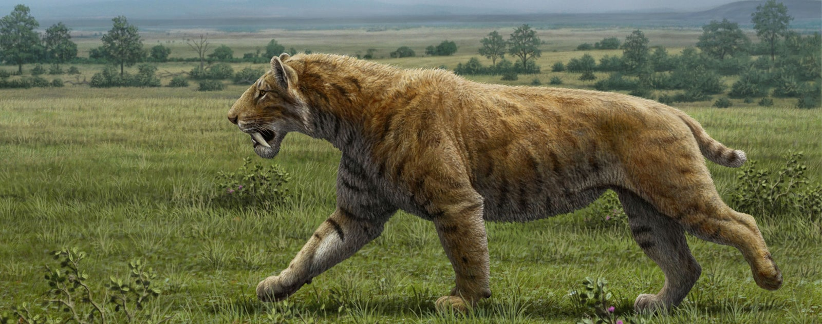 Reconstitution du Smilodon avant son extinction