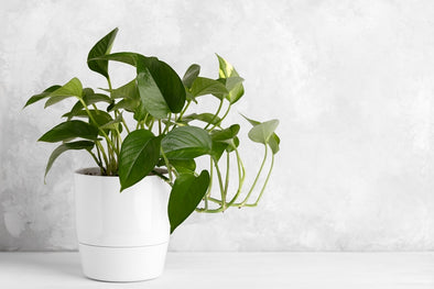 NASA Approved Plants That Purify Your Homes Air