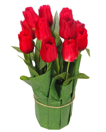 Potted Red Tulips