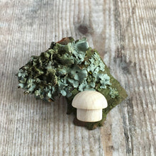 Load image into Gallery viewer, Tiny beech wood mushroom on lichen