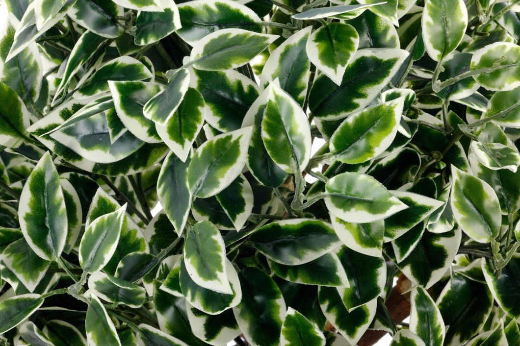 Artificial Variegated Ficus Ball 65cm - Angelo's Outlet Ltd