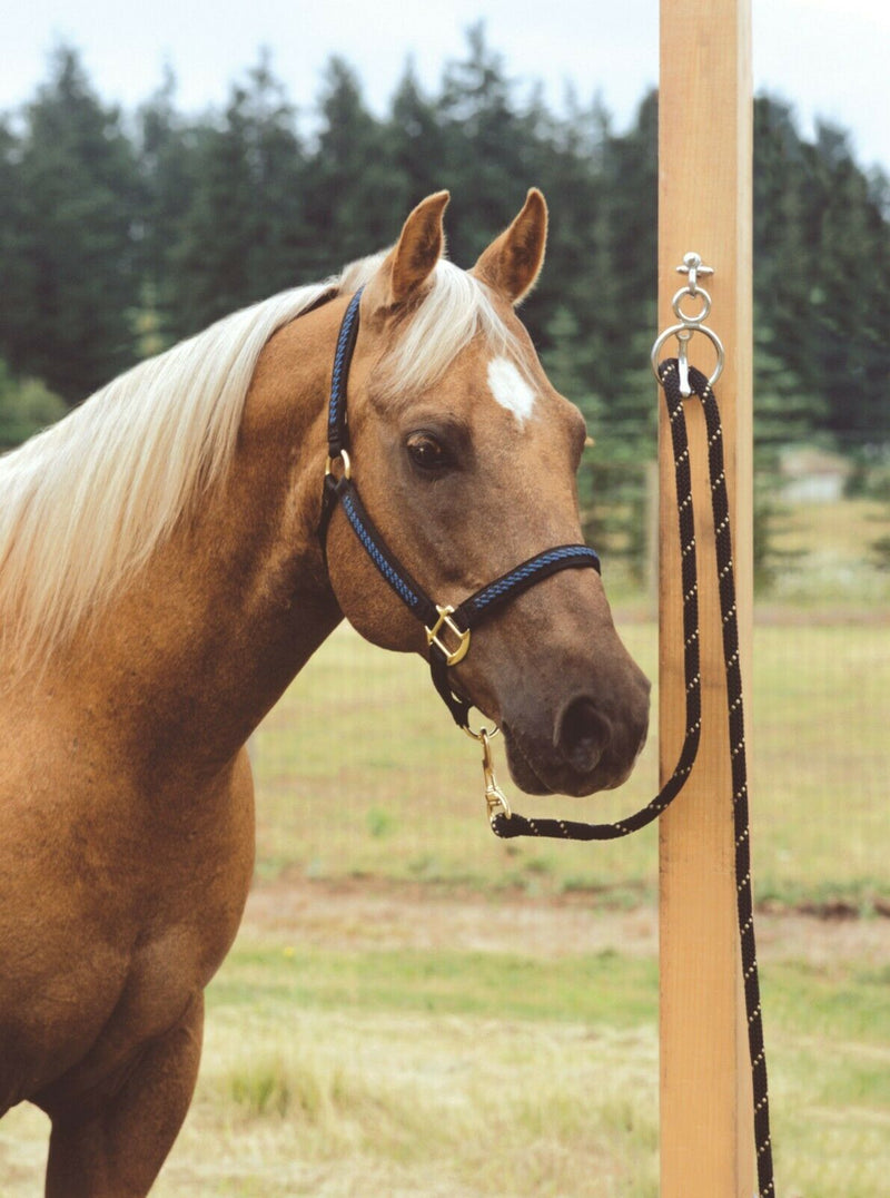 Shown with Horse Tied:  The Blocker Tie Ring has changed the way people tie their horses, providing a safe, humane way to tie your horse.