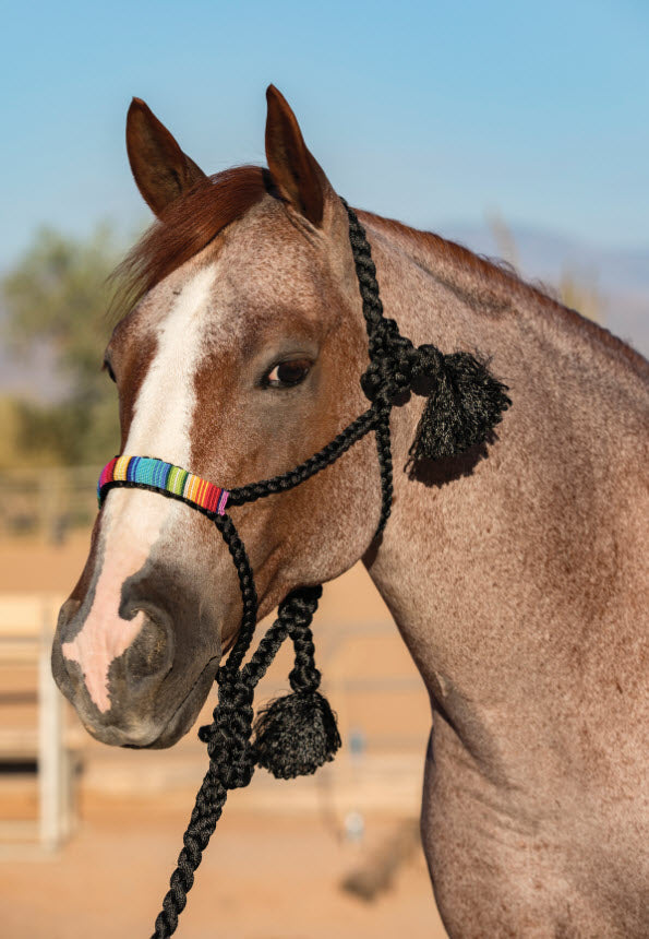 Cowboy Braided & Beaded Mule Tape Halter & 10 Foot Lead Rope