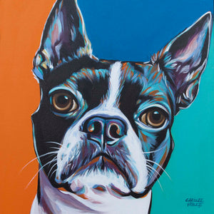 Boston Terrier multi color dog painting