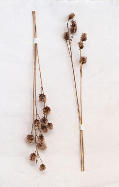 Dried Natural Platycarya Bunch Floral Creative Coop