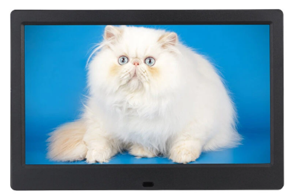Black digital frame with crisp photo of fluffy, blue-eyed white cat against turquoise background