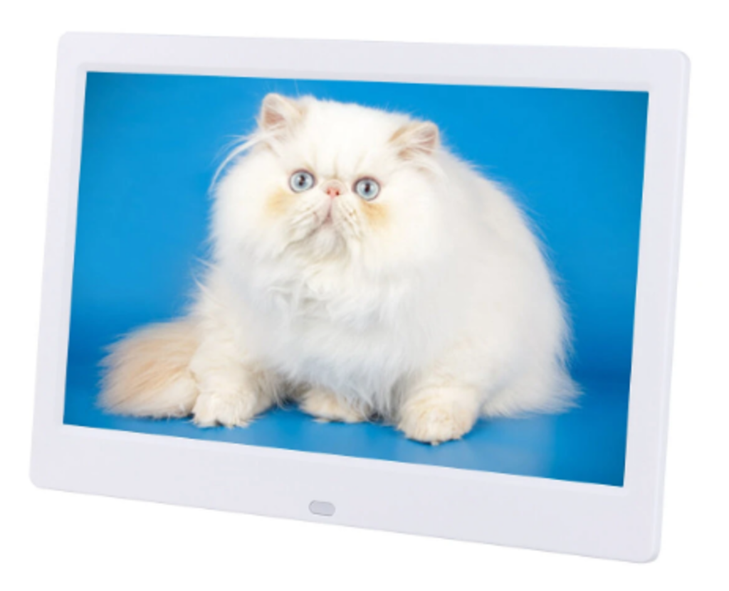 White digital frame with crisp photo of fluffy, blue-eyed white cat against turquoise background
