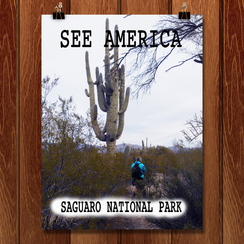 Saguaro National Park by Christine Lathrop for See America - 1