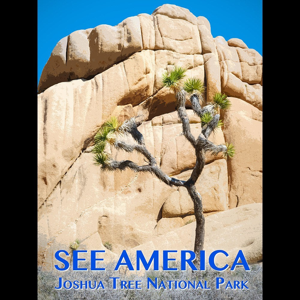 Joshua Tree National Park by Zack Frank for See America - 3