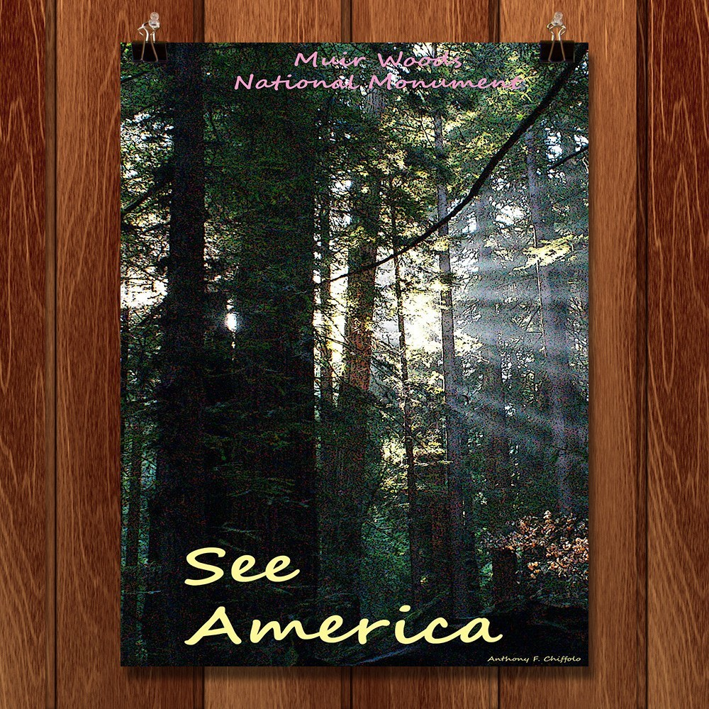 Muir Woods National Monument 2 by Anthony Chiffolo for See America - 1