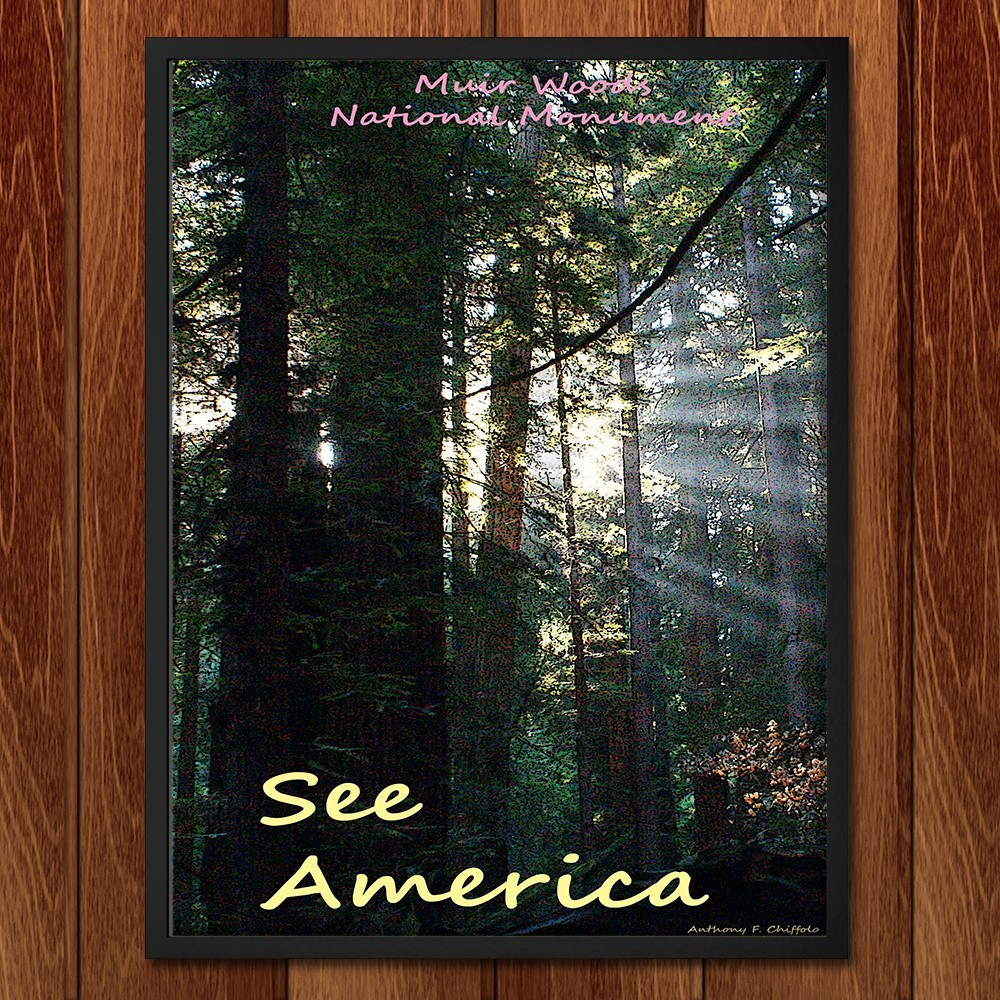 Muir Woods National Monument 2 by Anthony Chiffolo for See America - 2