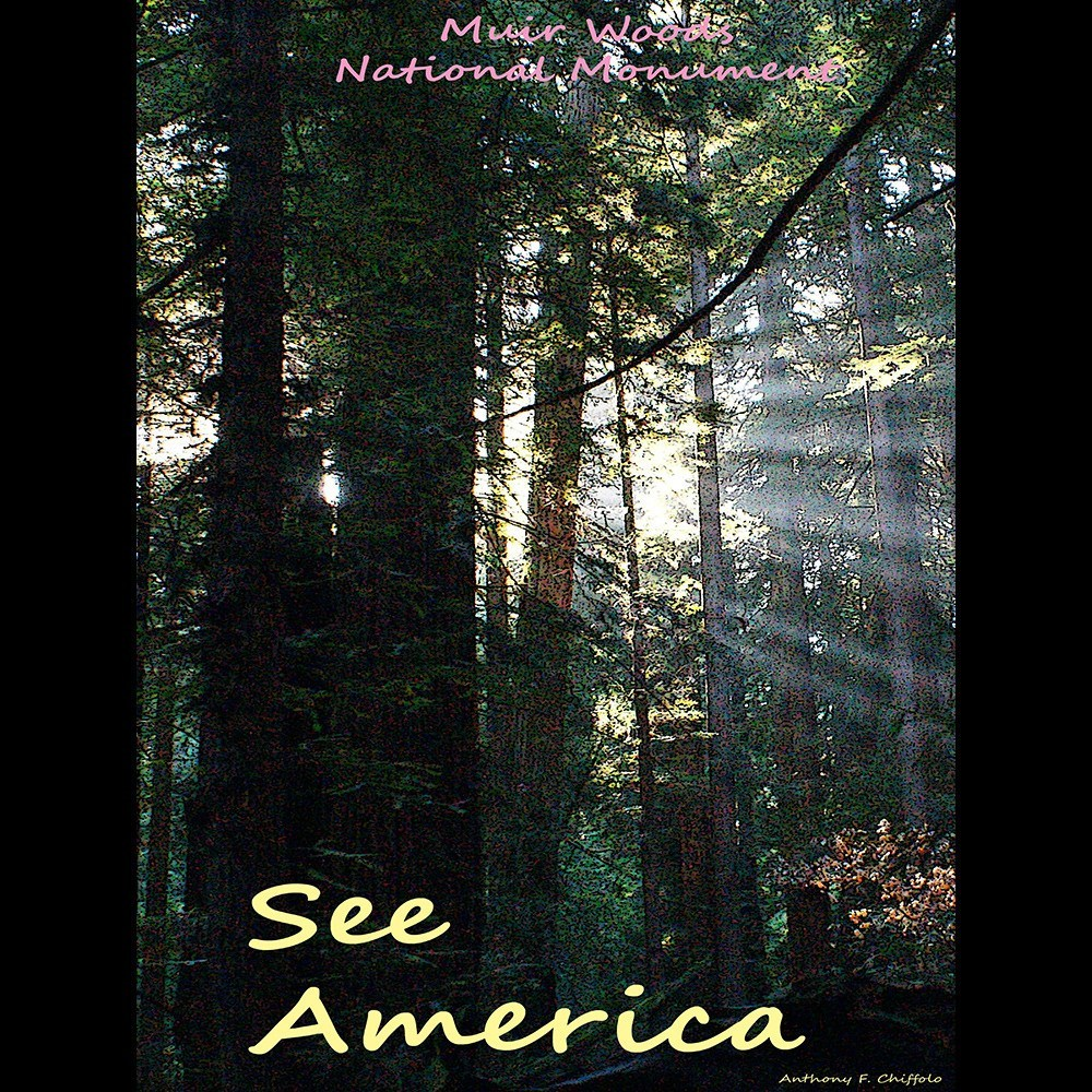 Muir Woods National Monument 2 by Anthony Chiffolo for See America - 3
