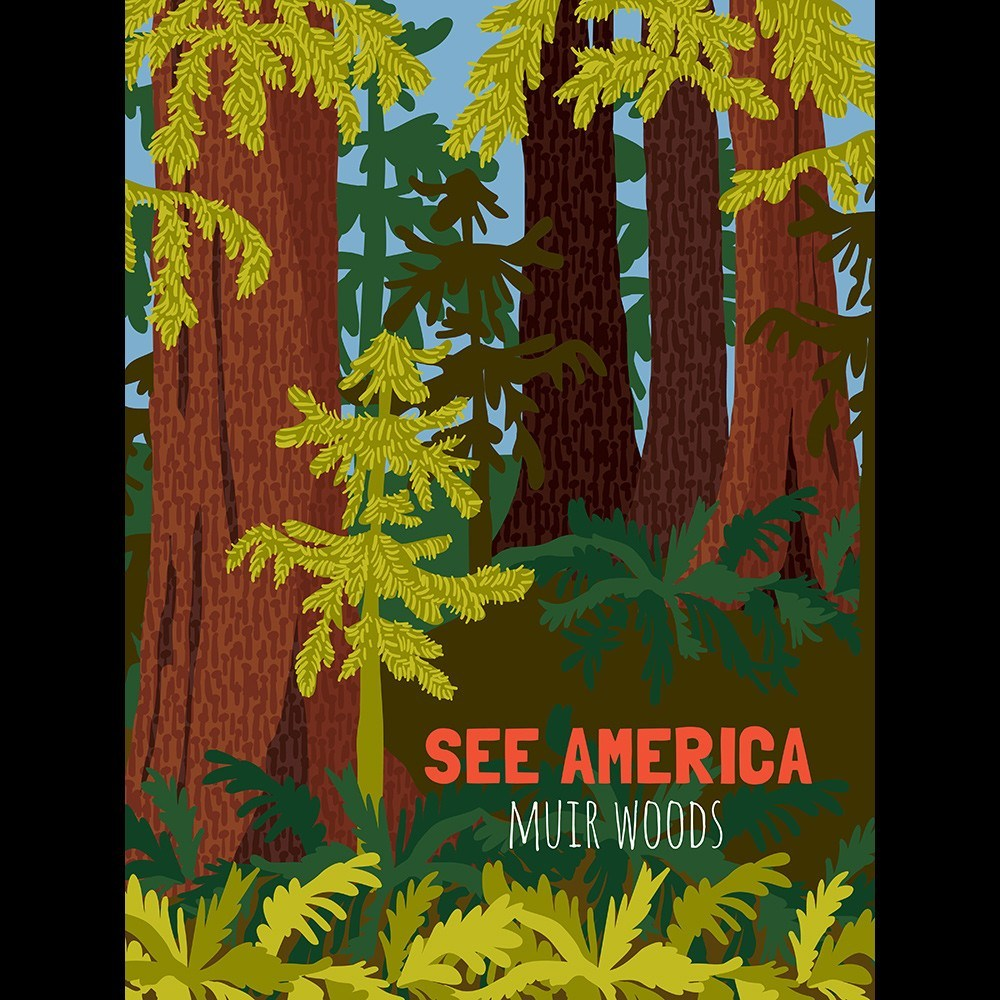 Muir Woods National Monument by Shayna Roosevelt for See America - 3