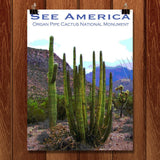 Organ Pipe Cactus National Monument 2 by Ann Huston for See America - 1
