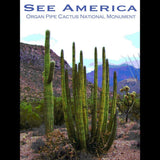 Organ Pipe Cactus National Monument 2 by Ann Huston for See America - 3