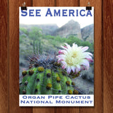Organ Pipe Cactus National Monument by Ann Huston for See America - 1