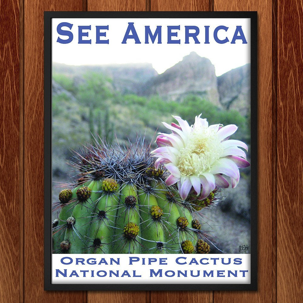 Organ Pipe Cactus National Monument by Ann Huston for See America - 2