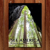 Redwood National and State Parks by Zack Frank for See America - 1
