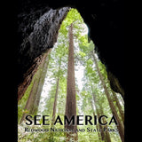 Redwood National and State Parks by Zack Frank for See America - 3