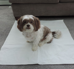 34x36 Size Washable Puppy Pads