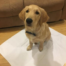 Load image into Gallery viewer, Classic Regular Reusable Puppy Potty Pads