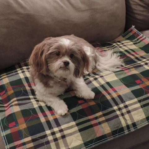 PersonallyPaws.com 24x36 Tartan Twill Plaid Print Washable pet pads