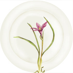 "Summer Blooms - Pink Anemone #2 - 10"" Dinner Plate"