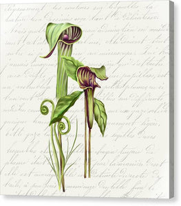 Summer Blooms - Jack-in-the-pulpit #2 - Canvas Print