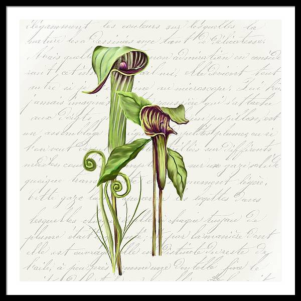Summer Blooms - Jack-in-the-pulpit #2 - Framed Print