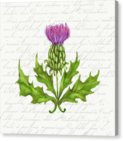 Summer Blooms - Thistle - Canvas Print
