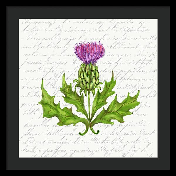 Summer Blooms - Thistle - Framed Print