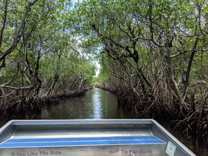 Mangroves Airboat Tour Everglades City