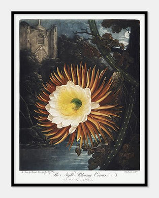 cereus | Robert Thornton - decoARTE