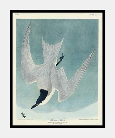 terne | John James Audubon - decoARTE