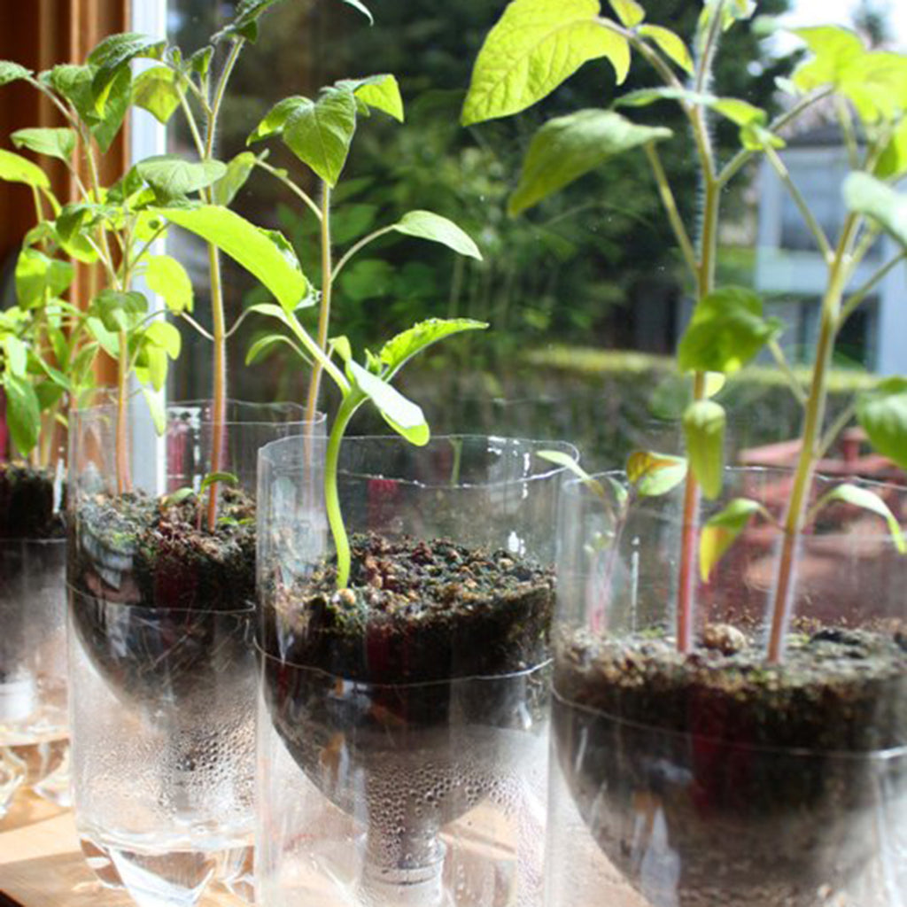 How To Self Watering Seed Starter Pots Skruben