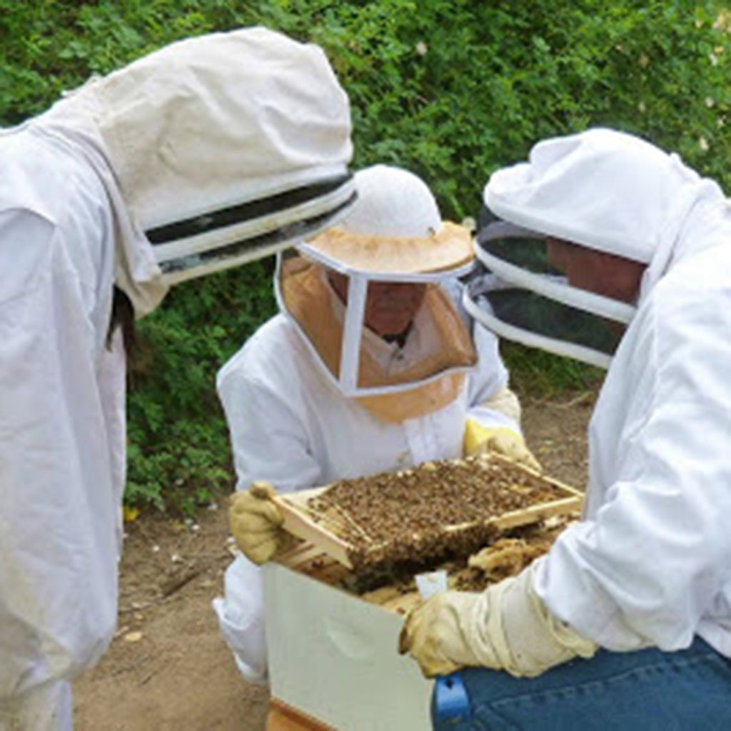 Britt's Beekeeping, Part 3: The Queen Bee