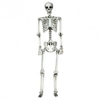 5.4ft Halloween Skeleton Life Size Realistic Full Body Hanging