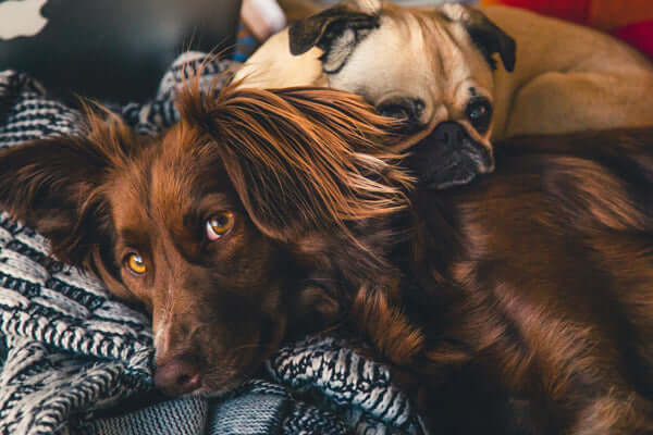 dogblanket