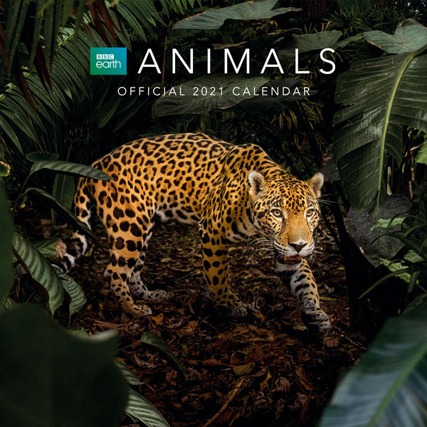 BBC Earth Animals 2021 Calendar Front
