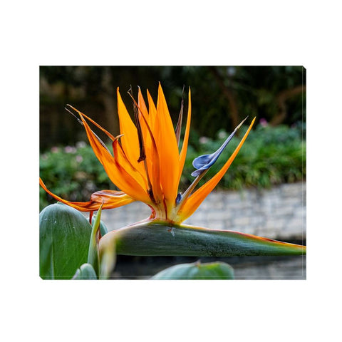 Bird of Paradise Canvas Wrap | Horstmann Designs, Photography Wall Art
