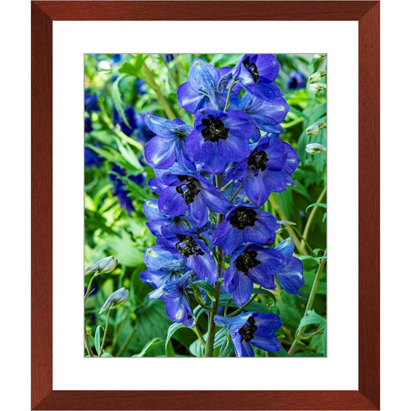 Black at Heart Floral Framed Print | Horstmann Designs, Photography Wall Art