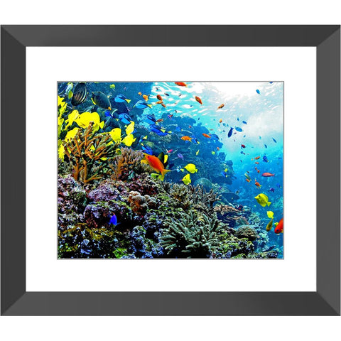 Brightly-Colored Fish Framed Print | Horstmann Designs, Photography Wall Art