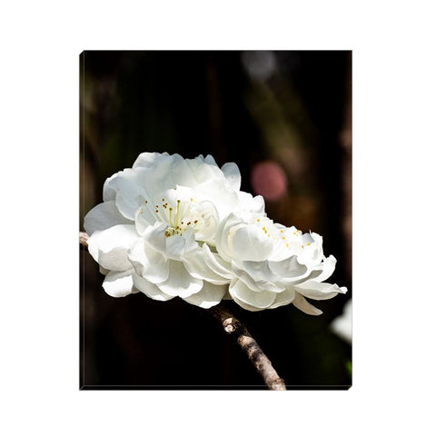 Cherry on Top Canvas Wrap | Horstmann Designs, Photography Wall Art