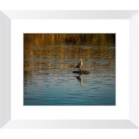 Double Crested Juvenile Framed Print | Horstmann Designs, Photography Wall Art