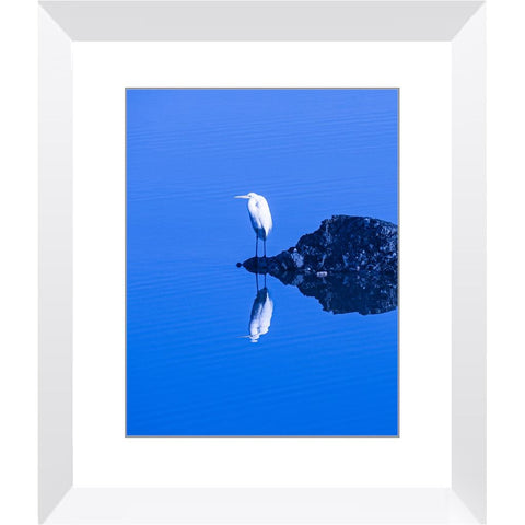 Egret in the Mirror Framed Print | Horstmann Designs, Photography Wall Art