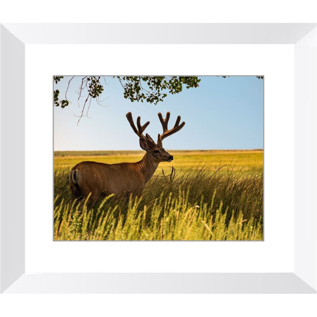 Elk in the Shade Framed Print | Horstmann Designs, Photography Wall Art