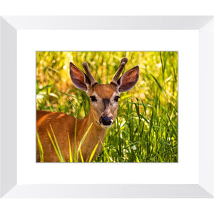 Fawn in the Grass Framed Print | Horstmann Designs, Photography Wall Art