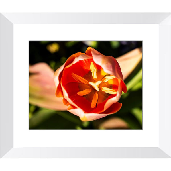 Flamboyant Up-Close Framed Print | Horstmann Designs, Photography Wall Art