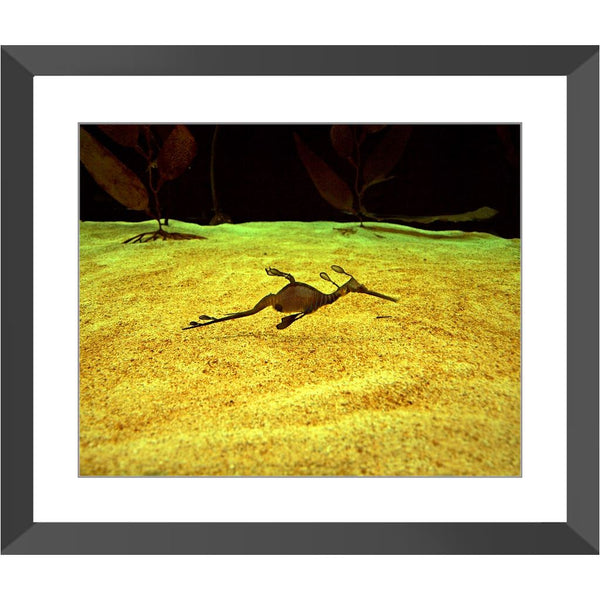 Floating Seahorse Framed Print | Horstmann Designs, Photography Wall Art
